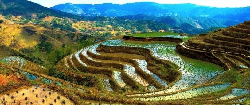 Микрокредиты позволяют увеличить урожай риса в Бангладеш